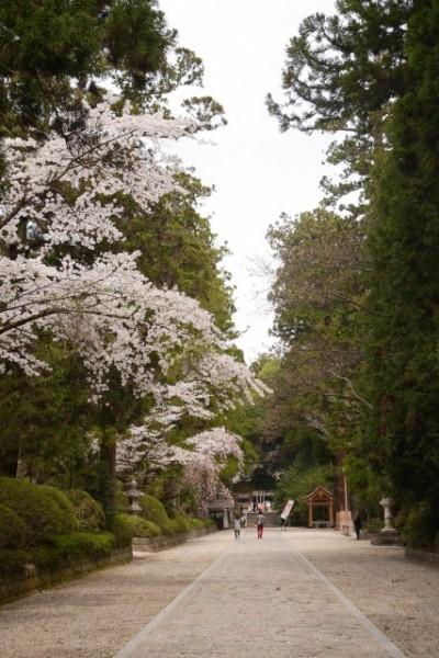 清々しい杉木立の参道