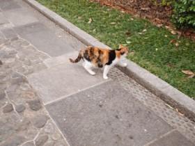 目の前を通り過ぎた輪王寺の猫1